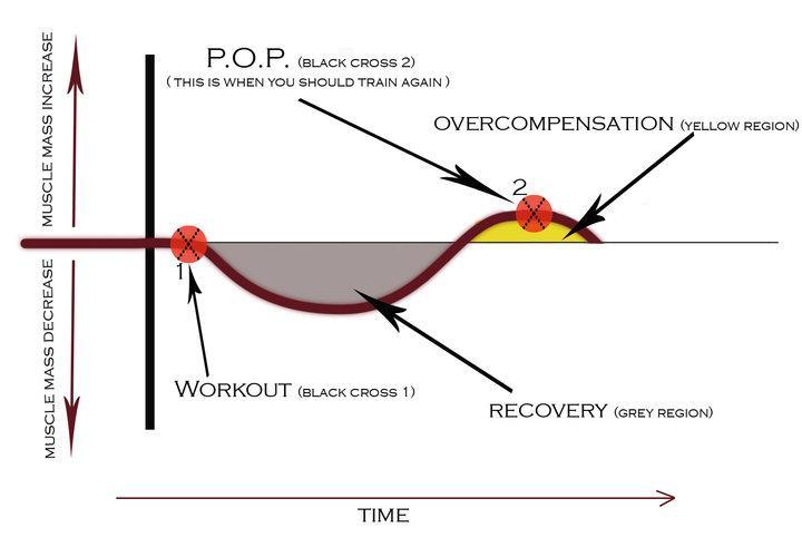 overtraining explained