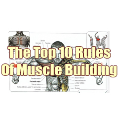 Rules-of-muscle-building