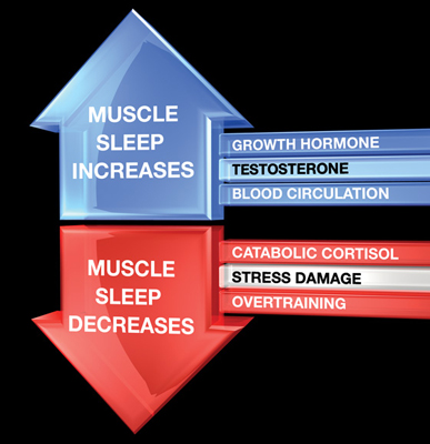 sleep-effects-muscle-growth