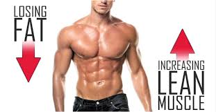 Image result for How To Gain Muscle And Lose Fat At The Same Time